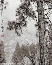 2020-10-Yosemite-Edit-Edi-withChopt.jpg