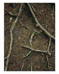 Tree Root Print.jpg