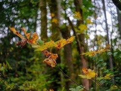 autumn dance.jpg