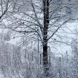 25.01.21_rtk-snow-again_0002.jpg