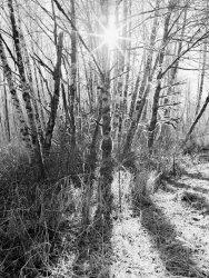 frosty grove.jpg