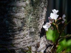 Almost spring 6.jpg