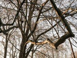 branching out (1).jpg