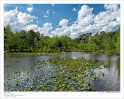 Colson_210505_DSCF0365-Edit-FrameShop.jpg