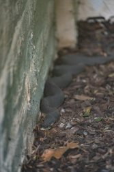 creatures at the house-2.jpg