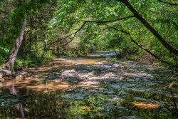 North Fork Creek-7.jpg