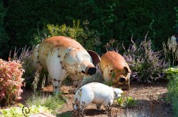 Pigs_x.jpg