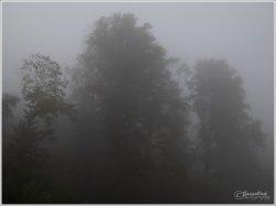 Autumn-begin-2021.jpg