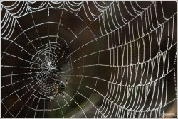 Spider-Web-Dew.jpg