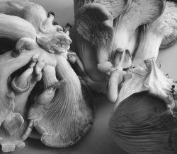 mushrooms pana 2 sml.jpg