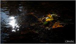 light-&-leaves.jpg
