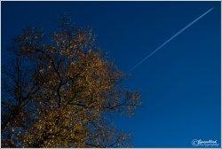 Autumn-tree-jet.jpg