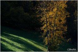 Lin's-tree.jpg