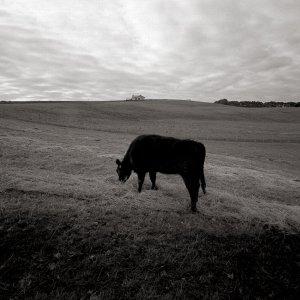 A Snap Made At My Farm