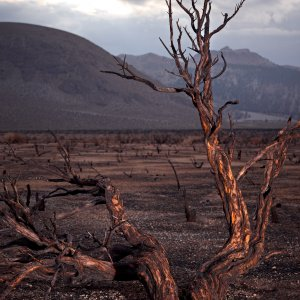 Yosemite Burned Bush