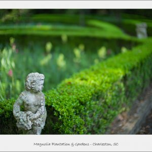 Magnolia Plantation - Charleston, Sc