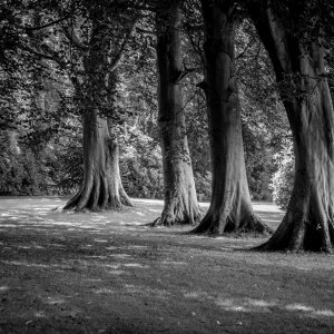 Milntowntree2