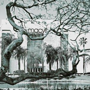 Macy's Tree