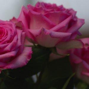 18.10.20_roses_0001.jpg