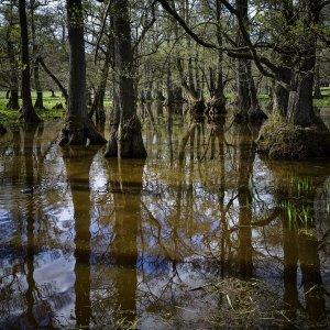 Dousbad Swamp X1D